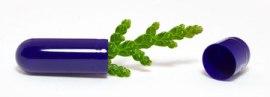 raw vitamins are plant based